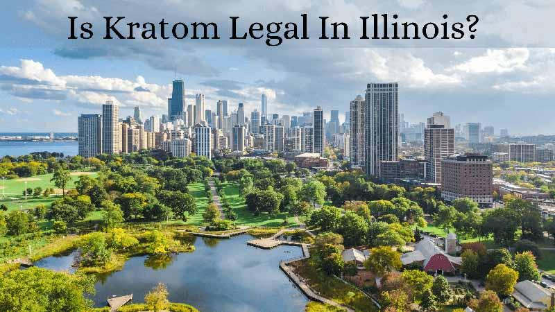 Is Kratom Legal in Illinois - by Oasis Kratom