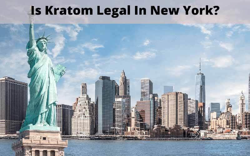 Is Kratom Legal in New York - by Oasis Kratom