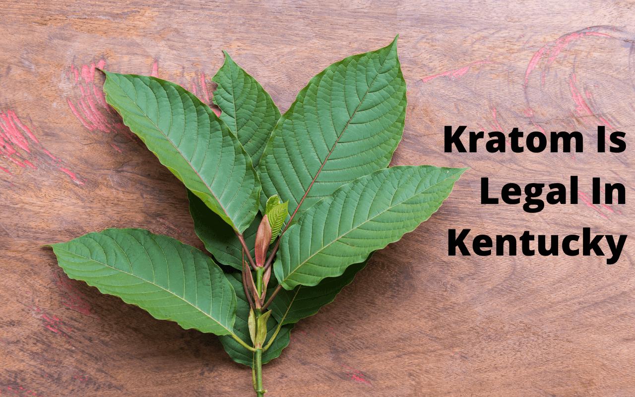 Is Kratom Legal In Kentucky