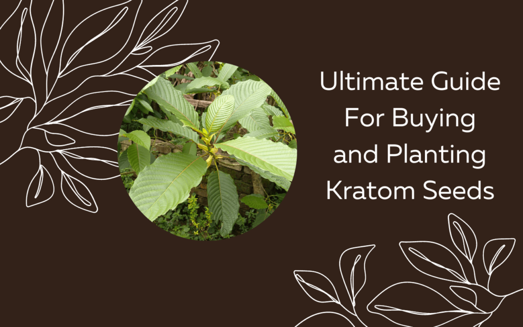 Ultimate Guide For Buying and Planting Kratom Seeds