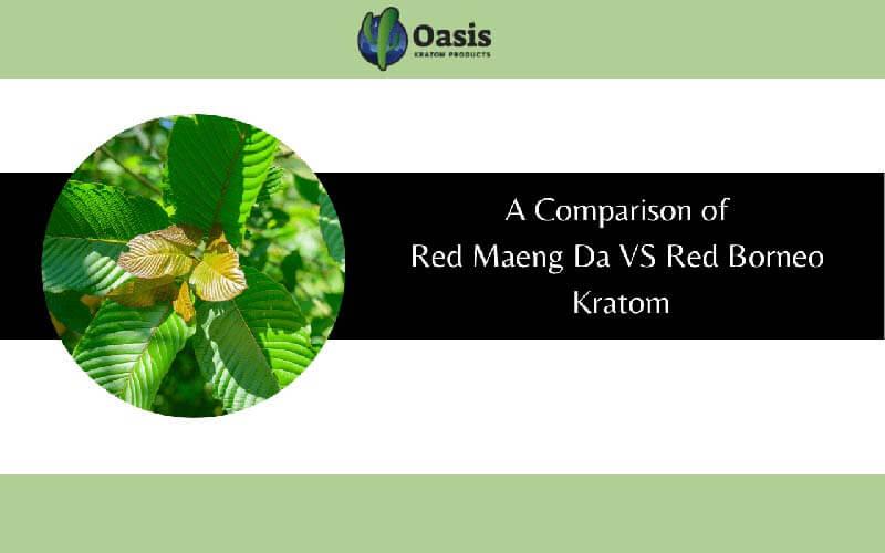 A Comparison of Red Maeng Da VS Red Borneo Kratom - by Oasis Kratom