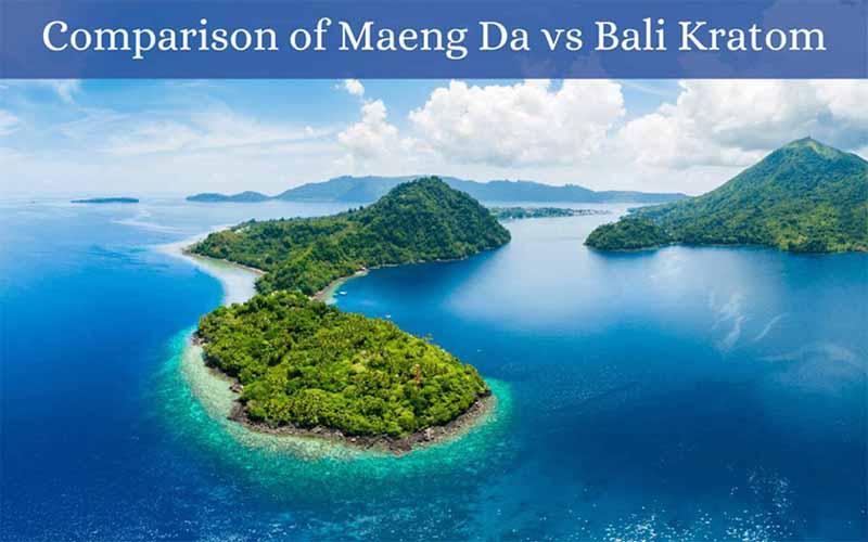 Comparison of Maeng Da vs Bali Kratom - by Oasis Kratom