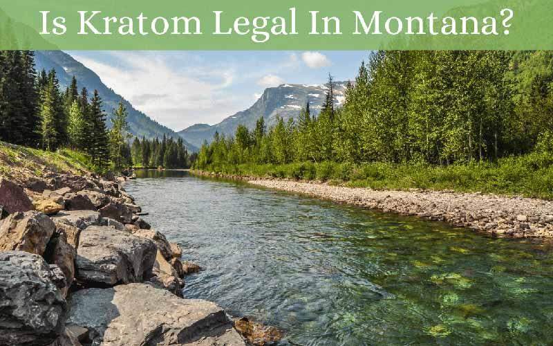 Is Kratom Legal In Montana - by Oasis Kratom
