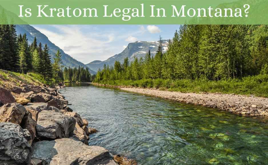 is kratom legal in montana-featured image-oasis kratom