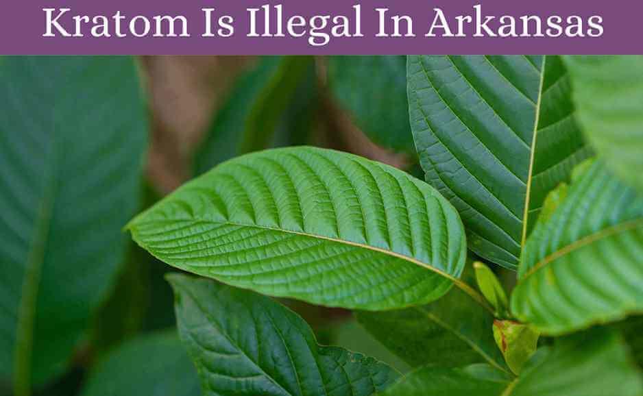 kratom is illegal in arkansas-oasis kratom