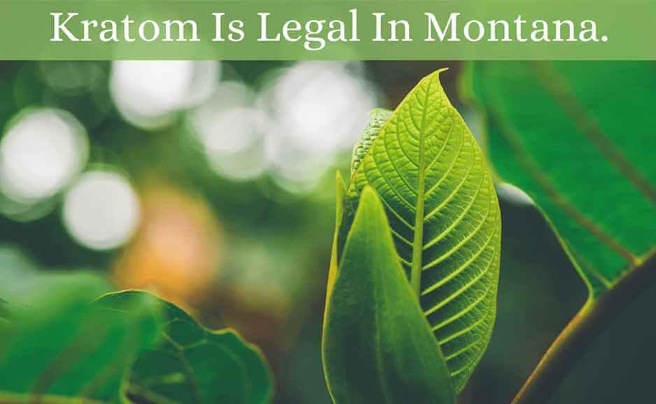 kratom is legal in montana-oasis kratom