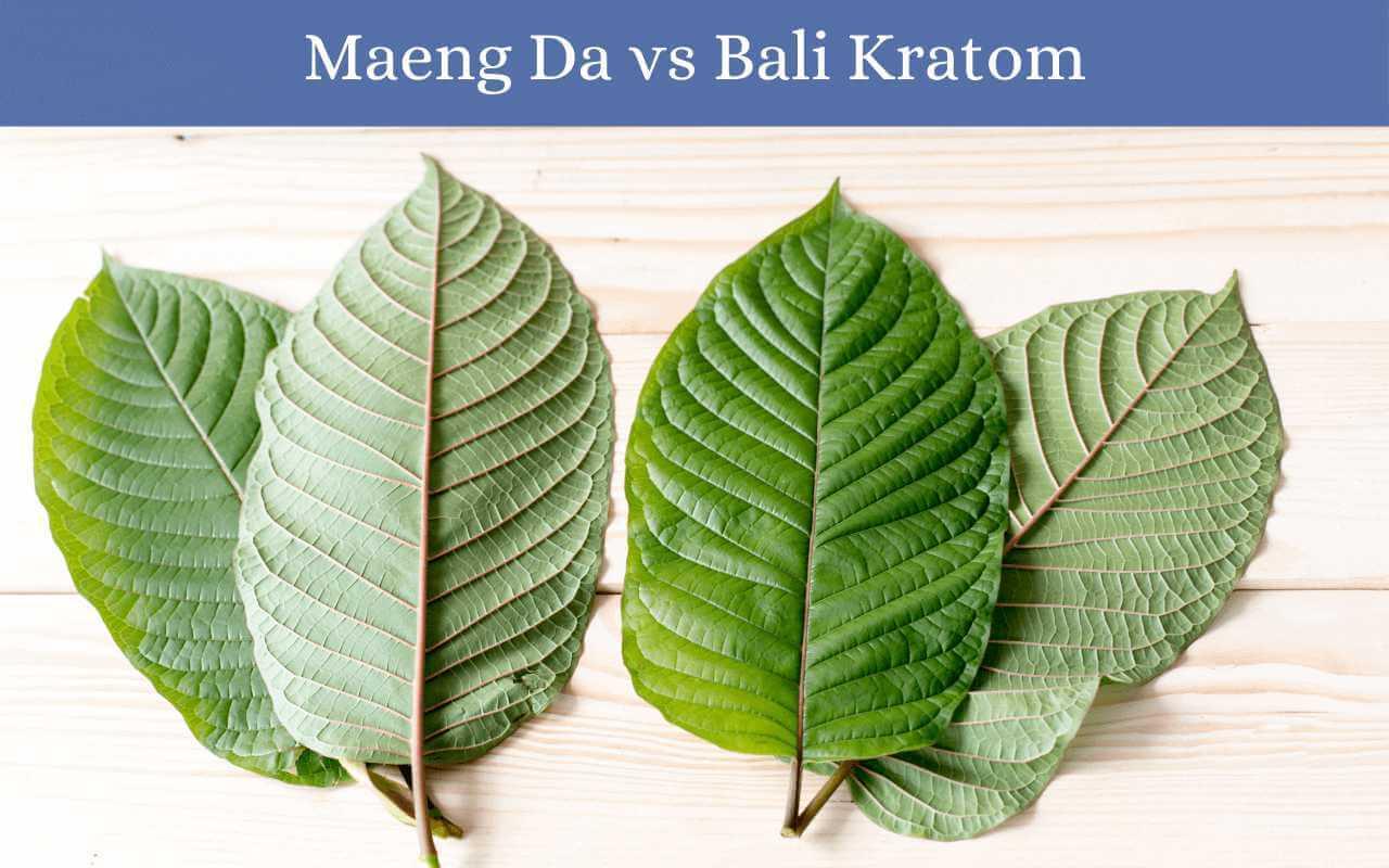 maeng da vs bali kratom-oasis kratom