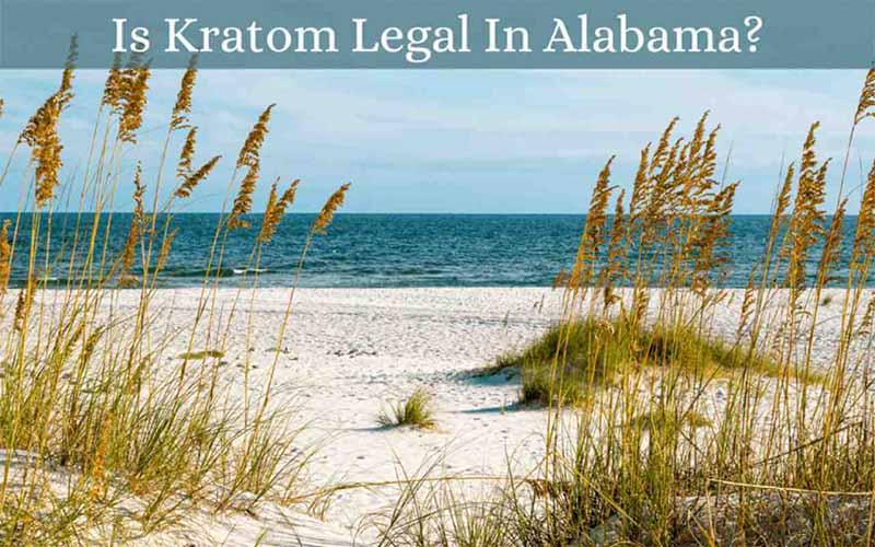 Is Kratom Legal In Alabama - by Oasis Kratom