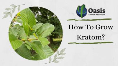 How To Grow Kratom - Oasis Kratom