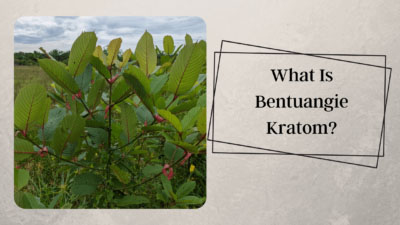 What Is Bentuangie Kratom - Oasis Kratom