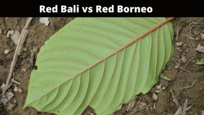 Comparison of Red Bali vs Red Borneo - Oasis Kratom