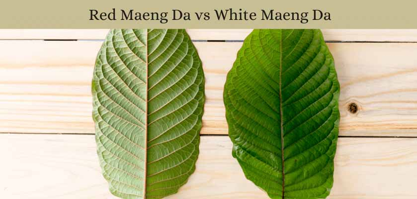 Red-Maeng-Da-vs-White-Maeng-Da-Oasis Kratom